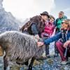 10 secrete despre lâna Merino